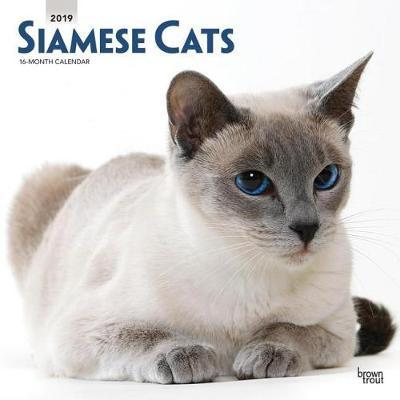 Siamese Cats 2019 Square Wall Calendar by Inc Browntrout Publishers