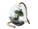 Maxwell & Williams - Little Jungle Terrarium Donut (17x7cm)