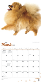 Pomeranians 2019 Square Wall Calendar by Inc Browntrout Publishers