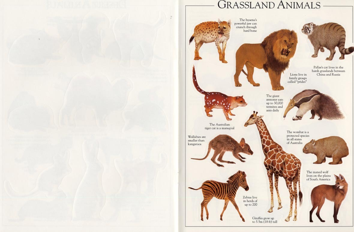 Animal Ultimate Sticker Book by DK image