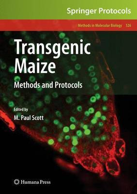 Transgenic Maize image