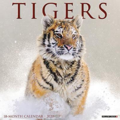 Tigers 2020 Wall Calendar by Willow Creek Press image