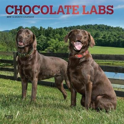 Labrador Retrievers, Chocolate 2019 Square Wall Calendar by Inc Browntrout Publishers image