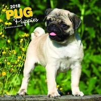Pug Puppies 2018 Square Wall Calendar by Inc Browntrout Publishers