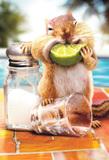 Avanti Greeting Card - Squirrel Lime