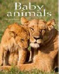 Baby Animals: Pocket Book by ,Fabrizio Bulgarini