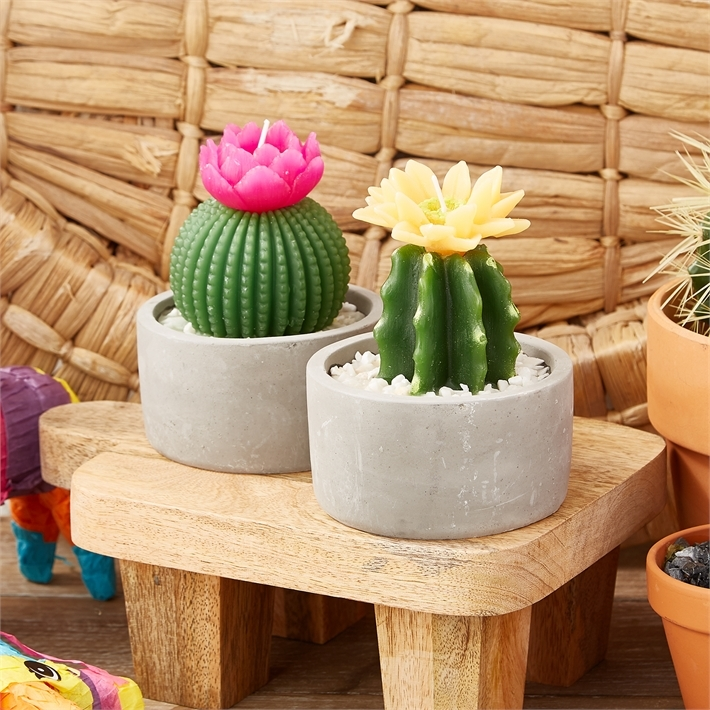Two's Company Cactus Candle in Pot image