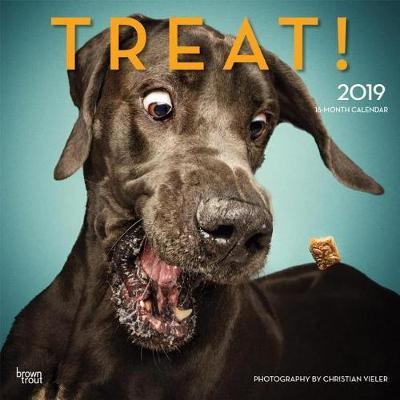 Treat 2019 Square Hachette by Inc Browntrout Publishers