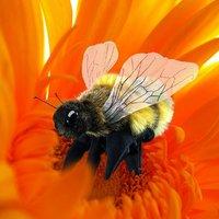 Folkmanis: Hand Puppet - Honey Bee