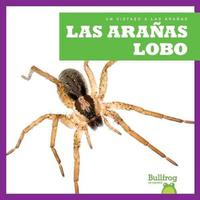 Las Aranas Lobo (Wolf Spiders) by Jenna Lee Gleisner image