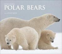 Polar Bears by Michel Rawicki