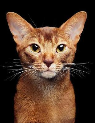 Abyssinian by Notebooks Journals Xlpress