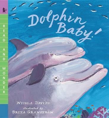 Dolphin Baby! by Nicola Davies