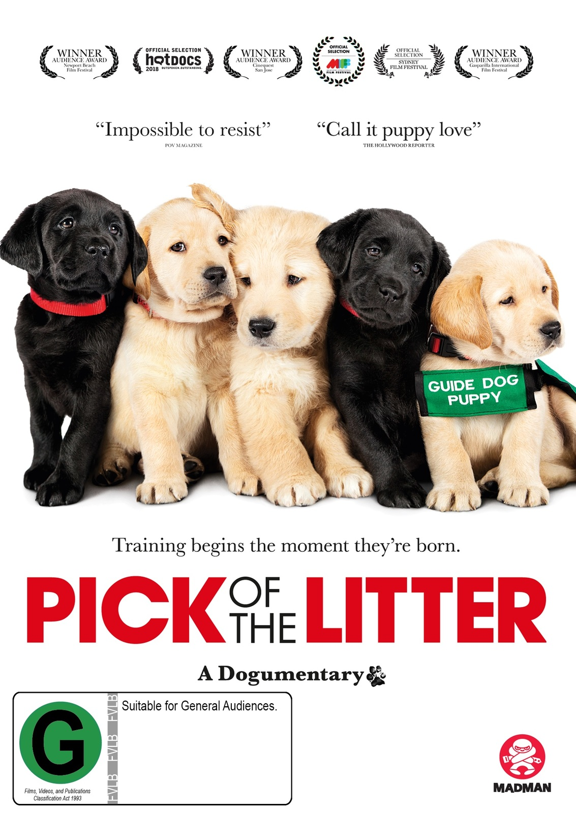 Pick Of The Litter on DVD image