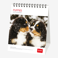 Puppies 2019 Desk Calendar
