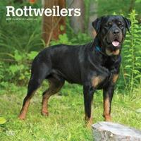 Rottweilers 2019 Square Wall Calendar by Inc Browntrout Publishers
