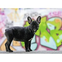 Ravensburger : French Bulldog Puzzle 500pc
