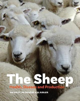 The Sheep by Dave West
