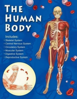 The Human Body image