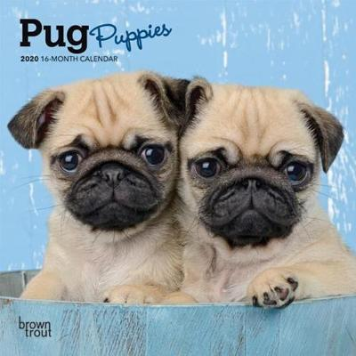 Pug Puppies 2020 Mini Wall Calendar
