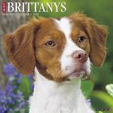 Just Brittanys 2018 Wall Calendar (Dog Breed Calendar) by Willow Creek Press
