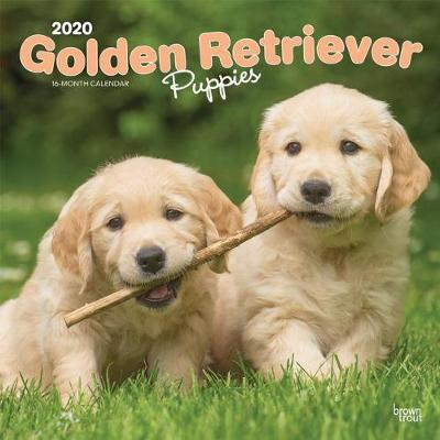 Golden Retriever Puppies 2020 Square Wall Calendar