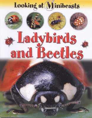 Ladybirds and Beetles by Sally Morgan image