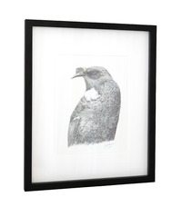 Framed Art Print - 'Tui Tom'