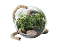 Maxwell & Williams - Little Jungle Terrarium Orbit (13cm)