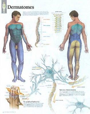 Understanding Dermatones