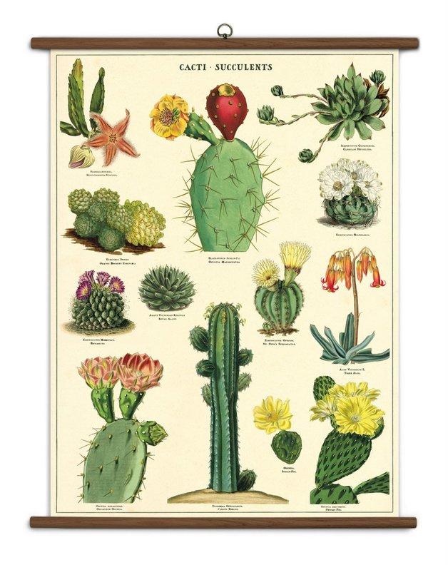 Succulent Vintage School Chart