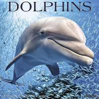 Dolphins 2019 Wall Calendar by Willow Creek Press
