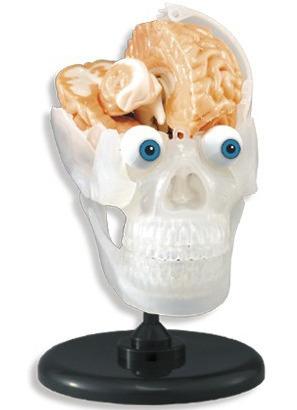 SmartLab - The Amazing Squishy Brain