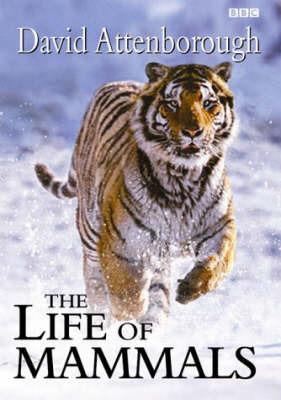 Life of Mammals by David Attenborough image