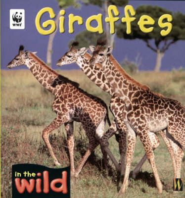 Giraffes by Patricia Kendell