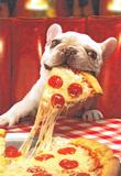 Avanti Greeting Card - Happeroni Dog
