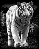 Reeves Scraperfoil Silver - White Tiger