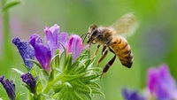 NZ Seed Bombs - Healing Herbs