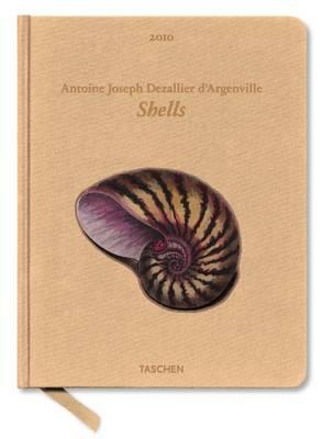 2010 Shells image