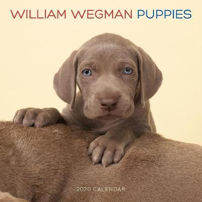 William Wegman Puppies 2020 Wall Calendar by William Wegman