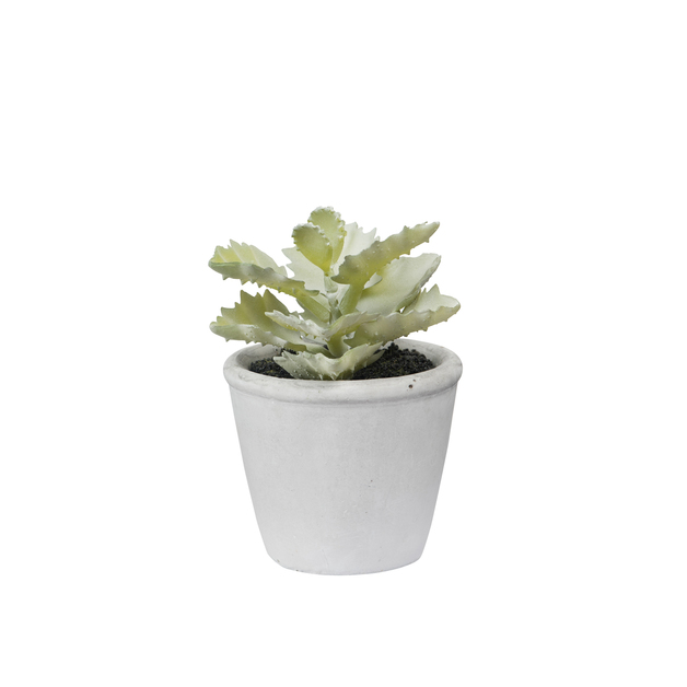 General Eclectic: Artificial Plant - Frilly Succulent