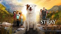 The Stray on DVD