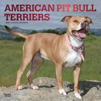 American Pit Bull Terriers 2019 Square Foil by Inc Browntrout Publishers