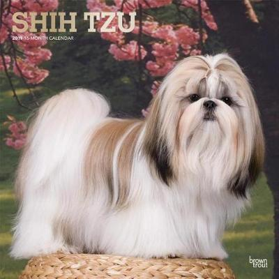 Shih Tzu 2019 Square Wall Calendar by Inc Browntrout Publishers image
