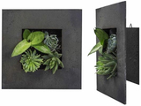 4 Plant Living Wall Art with Black Zinc Finish
