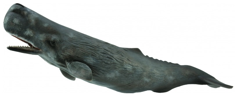 CollectA - Sperm Whale image