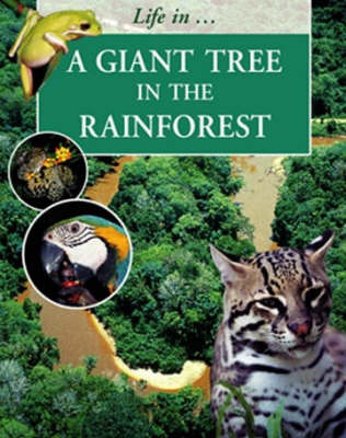 LIFE IN A GIANT TREE IN RAINFOREST image