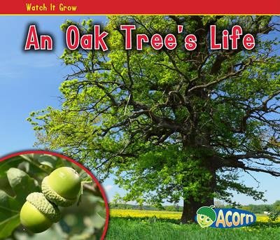 An Oak Tree's Life by Nancy Dickmann image