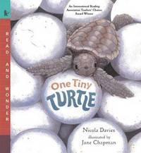 One Tiny Turtle by Davies Nicola