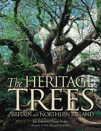 The Heritage Trees by Jon Stokes image